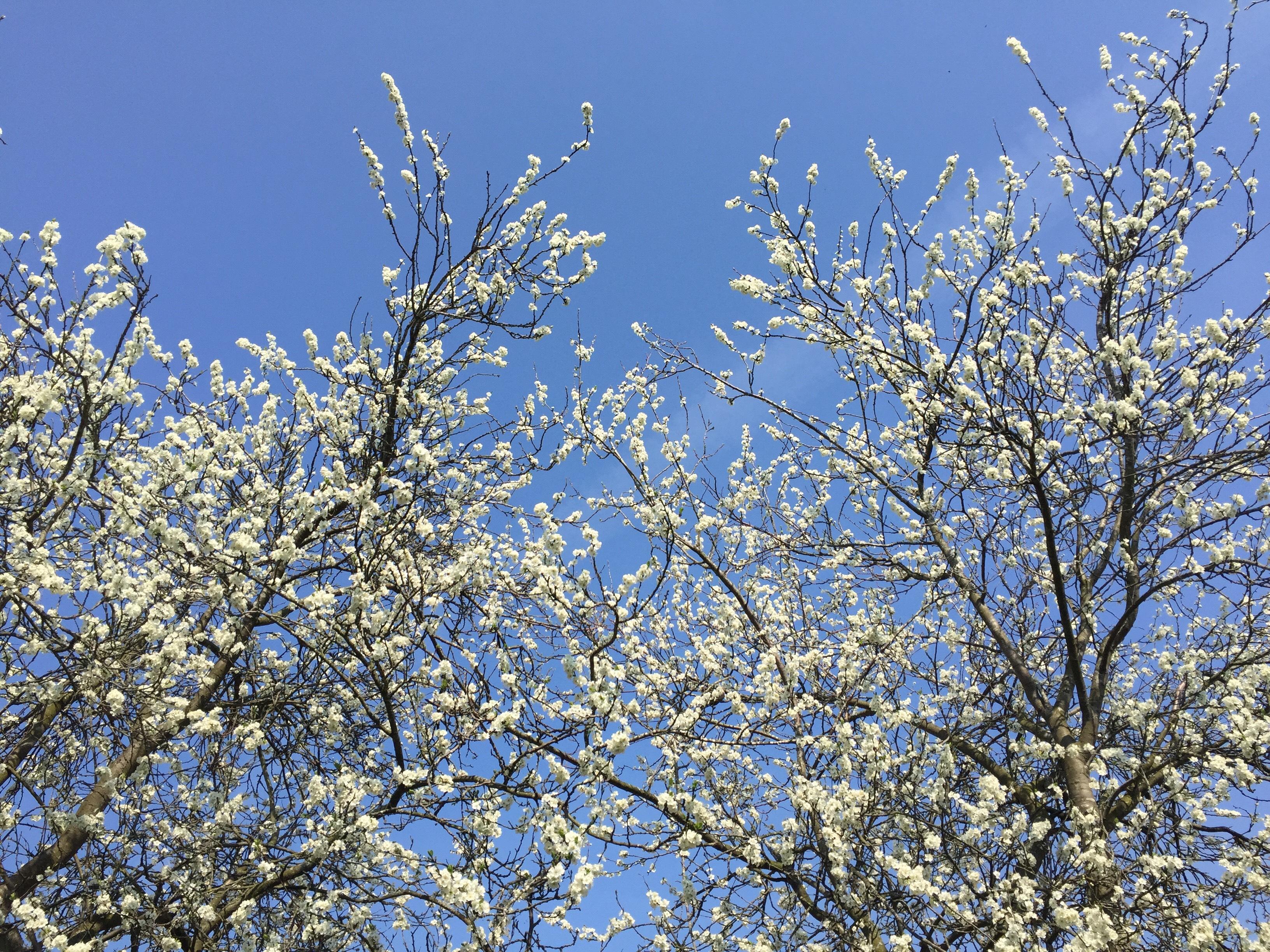 Rondleiding Hoorn - Lente - een prachtige dag voor een stadswandeling