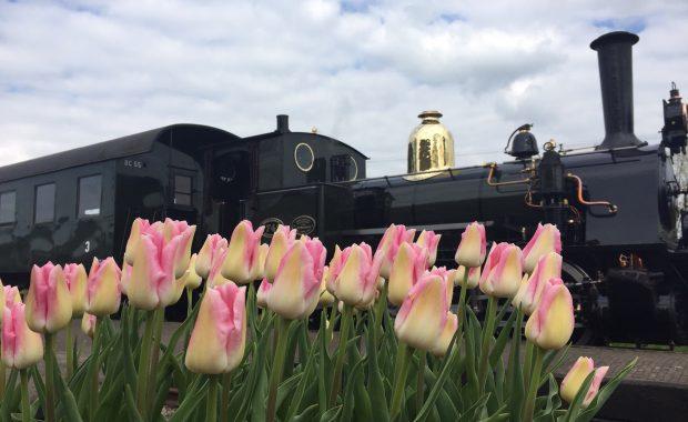 Rondleiding Hoorn - Stoomtrein en tulpen