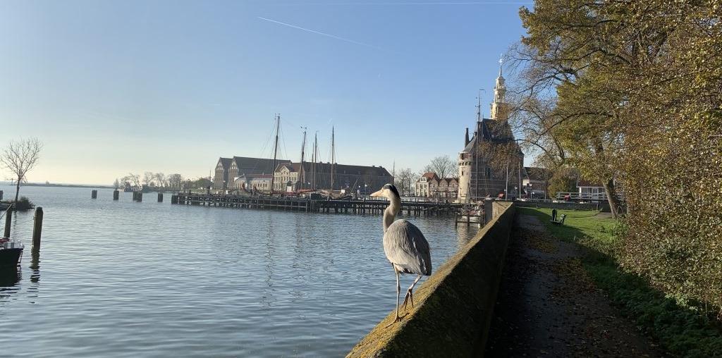 Prachtig uitzicht - Local Guide Hoorn