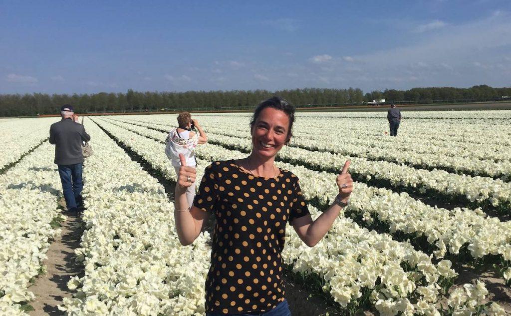 Tulip Fields Amsterdam